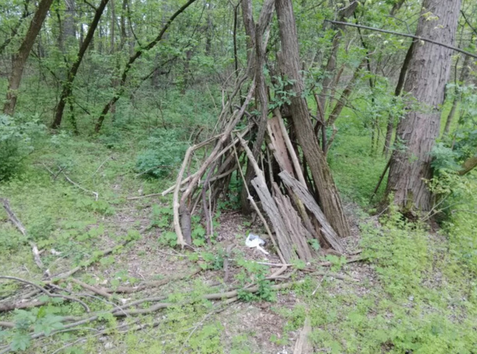 Sasquatch structure