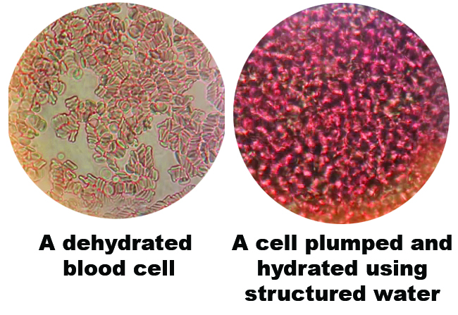 Structured Blood Cell