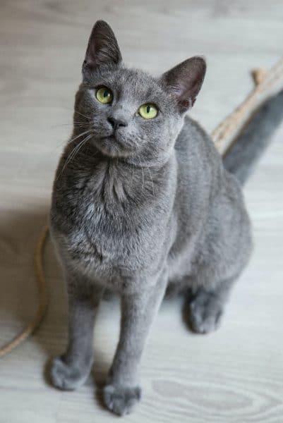 Adrian's Cat