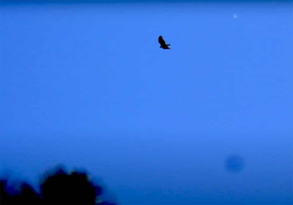 Hawk near Dome