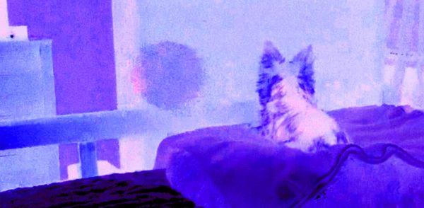 Animal Paranormal